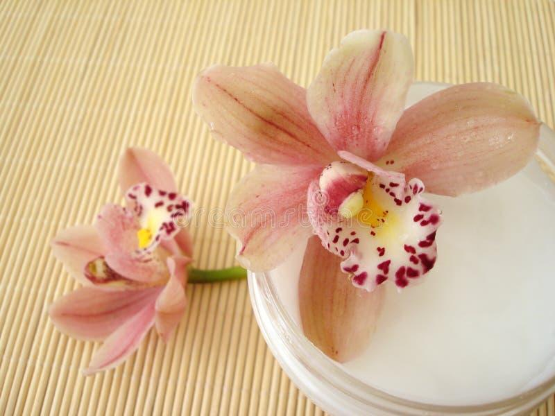 Recipiente do creme hidratando do cosmético com orquídeas cor-de-rosa fotografia de stock royalty free