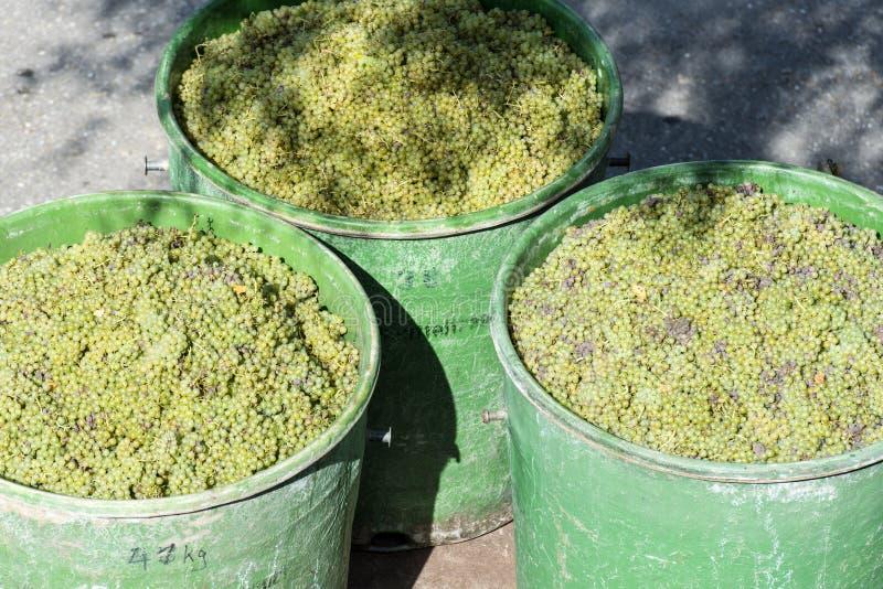 Recipientes completamente das uvas brancas no reboque foto de stock