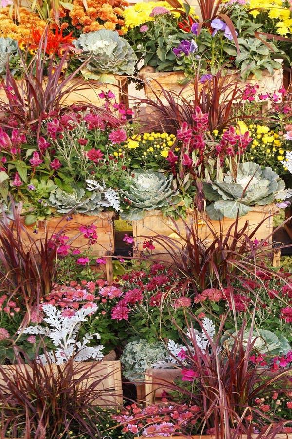 Recipientes de flores vibrantes da queda para a venda no Garden Center imagens de stock royalty free