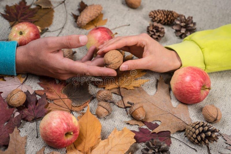 Reclameconcept Plaats voor uw tekst de tijd van de bladdaling voor Manierverkoop De kleurrijke herfst en droog de herfstblad Blad royalty-vrije stock foto's