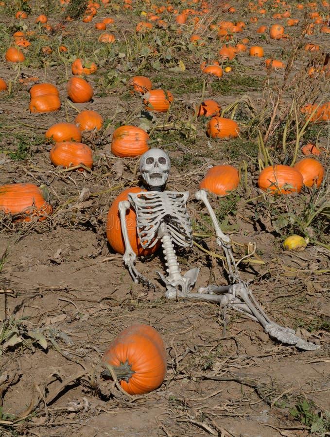 Reclinação de esqueleto de Dia das Bruxas no remendo da abóbora de outono imagens de stock