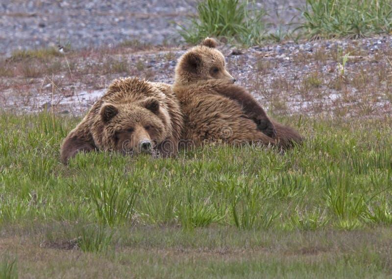 Reclinación de la puerca y del cachorro del oso del grisáceo fotos de archivo libres de regalías