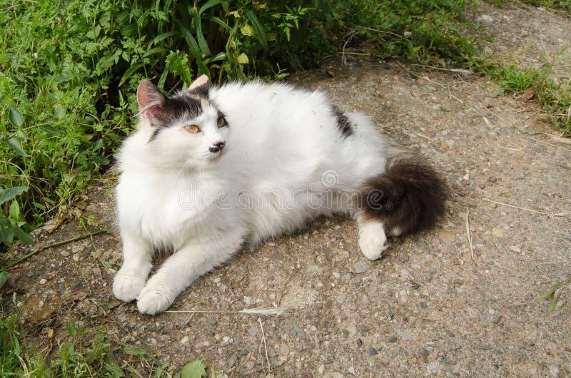 Reclinación del gato fotografía de archivo libre de regalías