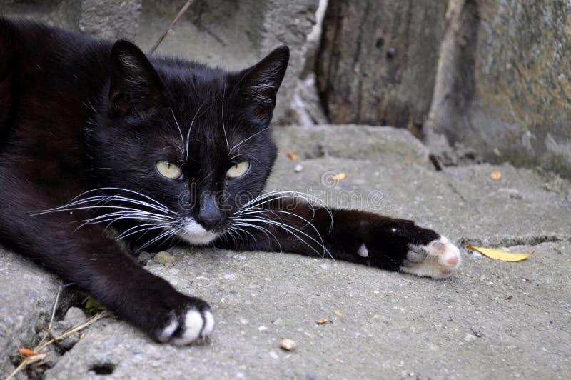 Reclinación del gato negro foto de archivo