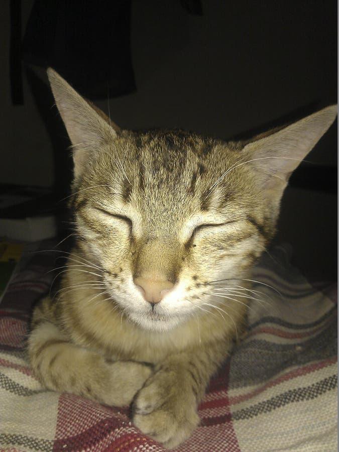 Reclinación del Puss, relajando en ella el asilo más seguro imagen de archivo libre de regalías