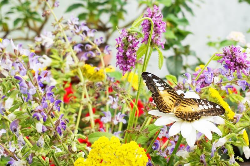 Reclinación tropical de la mariposa imagen de archivo libre de regalías
