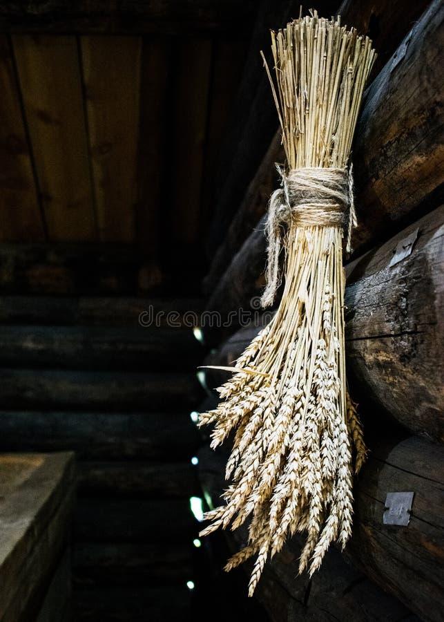 Recogido en un manojo de oídos amarillos secos del trigo Colgante en una pared de madera fotos de archivo