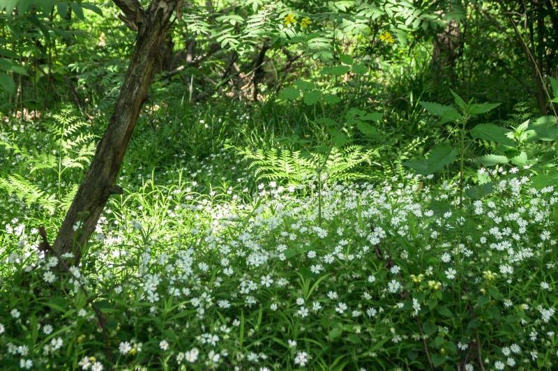 Recoin reculé confortable de la forêt d'été à la lumière du soleil de matin photographie stock libre de droits
