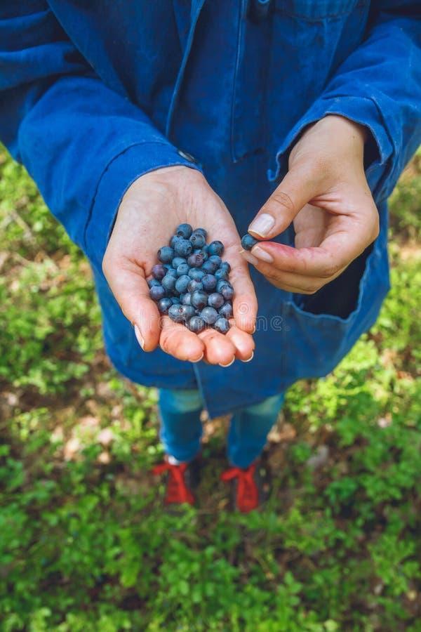 Recolhendo mirtilos na floresta imagens de stock