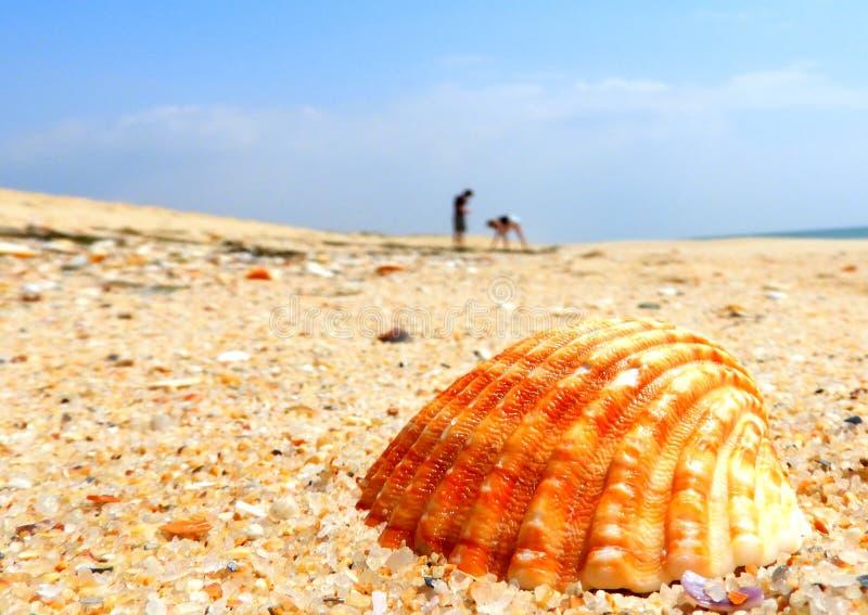Recolhendo shell na praia fotos de stock