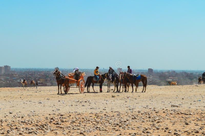 Recolhimento do cavalo em pirâmides de Giza imagem de stock royalty free