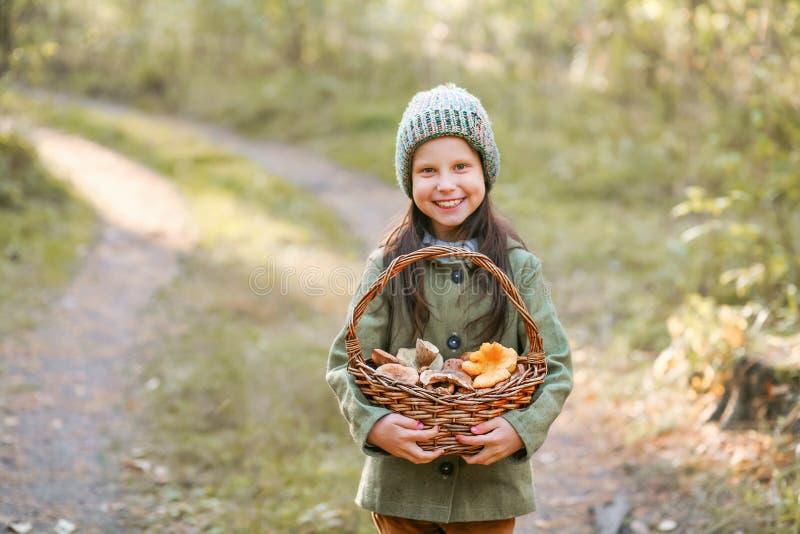 Recolhimento dos cogumelos imagem de stock