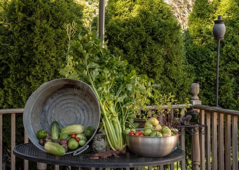Recompensa do jardim da colheita do verão no quintal modesto imagem de stock