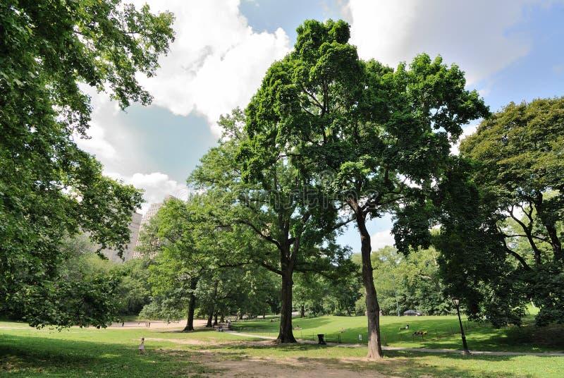Reconstrucción de Central Park fotografía de archivo libre de regalías