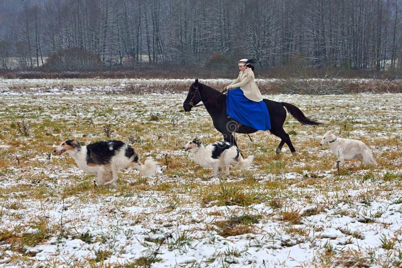 Reconstrucción de la caza tradicional con el perro lobo ruso fotos de archivo