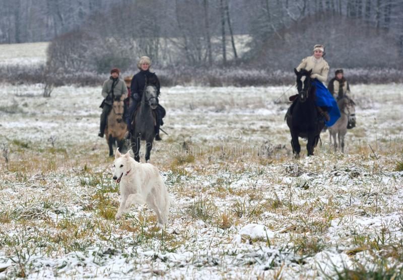 Reconstrucción de la caza tradicional con los perros lobo rusos imágenes de archivo libres de regalías
