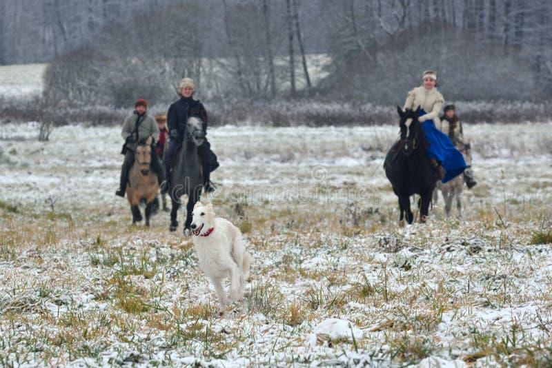 Reconstrucción de la caza tradicional con los perros lobo rusos foto de archivo libre de regalías