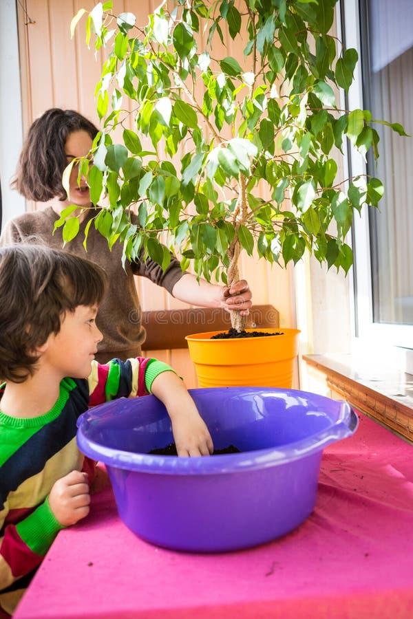 Reconversion des plantations des fleurs ? la maison photo stock