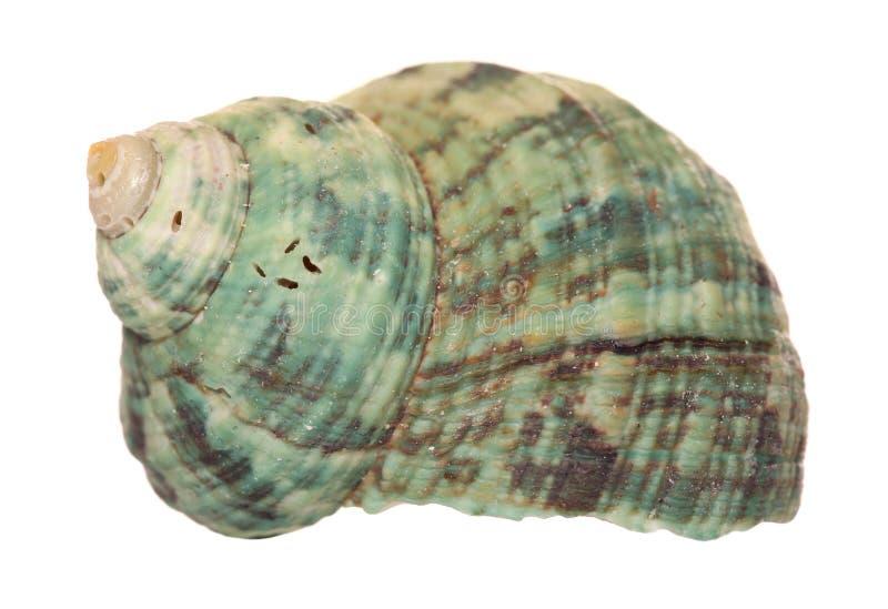 Recorte verde de la concha marina fotos de archivo libres de regalías