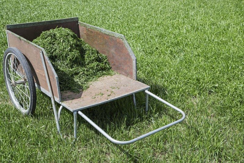 Recortes de la hierba del carro de jardín foto de archivo