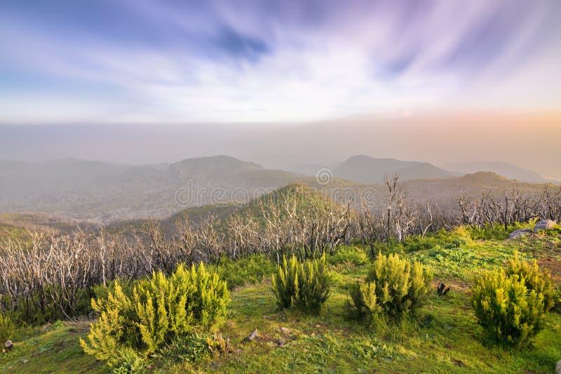 Recovering juniper forest after the fire. On Alto de Garajonay (La Gomera) - Canary Islands - Spain stock image