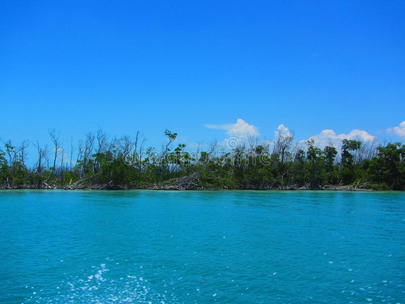 Recovering mangrove forest. Mangrove forest that has sustained hurricane damage and is in the process of recovering. Island offshore Cuba, Isle of Youth royalty free stock photos