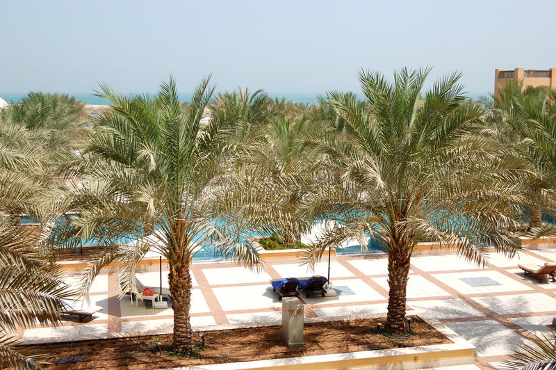Download Recreation Area Of Luxury Hotel With Date Palm Stock Photo - Image: 26241428