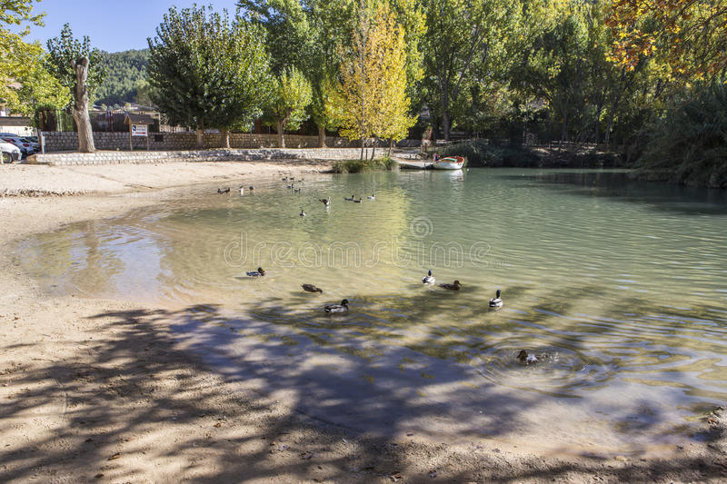 Recreation area on the River Jucar,Some ducks swim in the water, take in Alcala of the Jucar, Albacete province, Spain. Recreation area on the River Jucar,Some stock photography