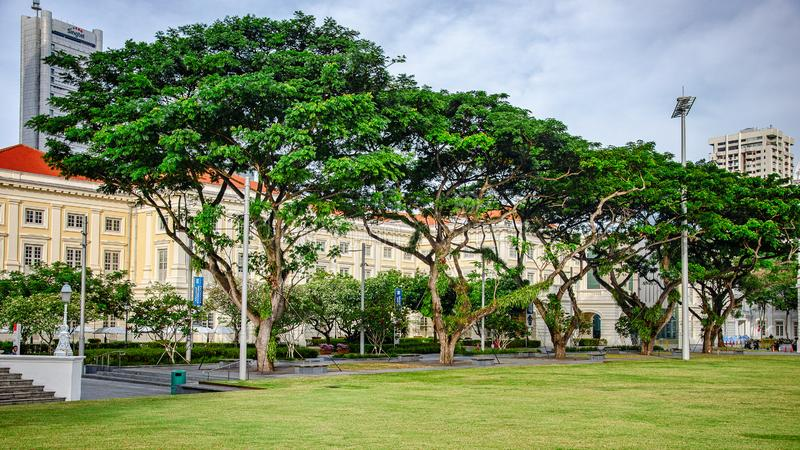 Recreation grass in Empress Lawn Park. Singapore - March 24, 2018: The wide lawn with trimmed grass and the walkways with tall trees alongside provides royalty free stock images