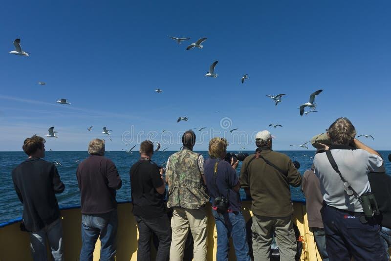 Recreation at Wadden Sea stock photos