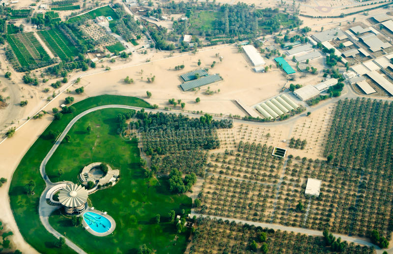 Recreational center with palm plantation