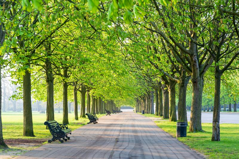 Recreational path in green park lined up with trees and beanch. stock photography