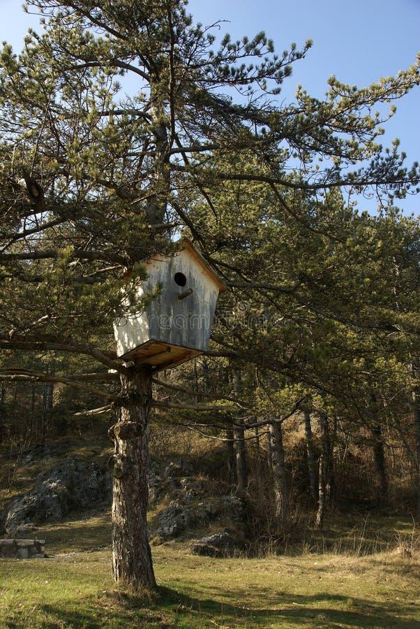 Rectángulo de madera enorme del polluelo fotografía de archivo libre de regalías