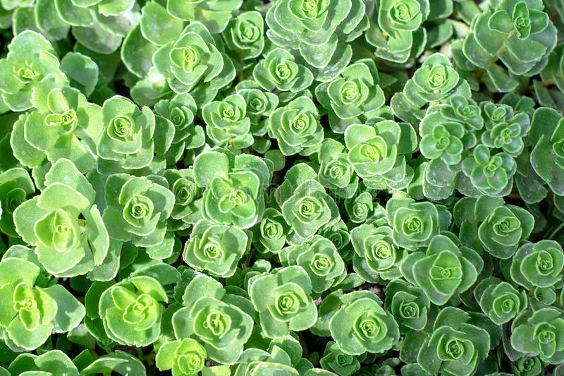 Rectangular arrangement of succulents. Cactus succulents in planter.  royalty free stock photos
