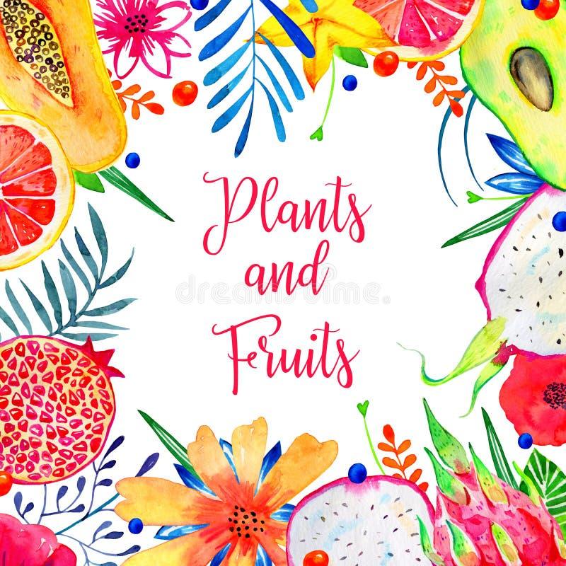 Rectangular frame with exotic fruits and decorative flowers. Avocado, pitahaya, citrus, avocado, papaya stock images