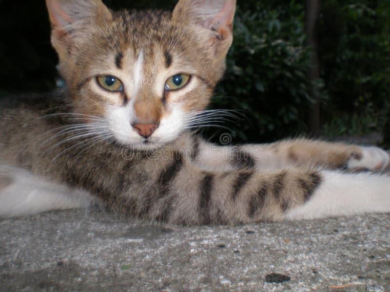 Recumbent cat. On the street royalty free stock image