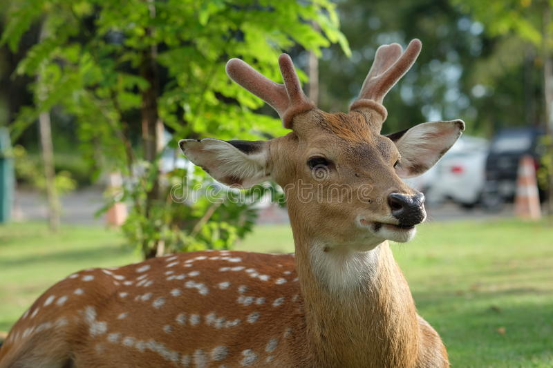 The recumbent deer on the ground. Photo of The recumbent deer on the ground stock photo