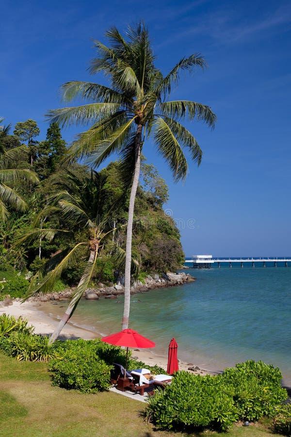 Recuo tropical imagem de stock royalty free