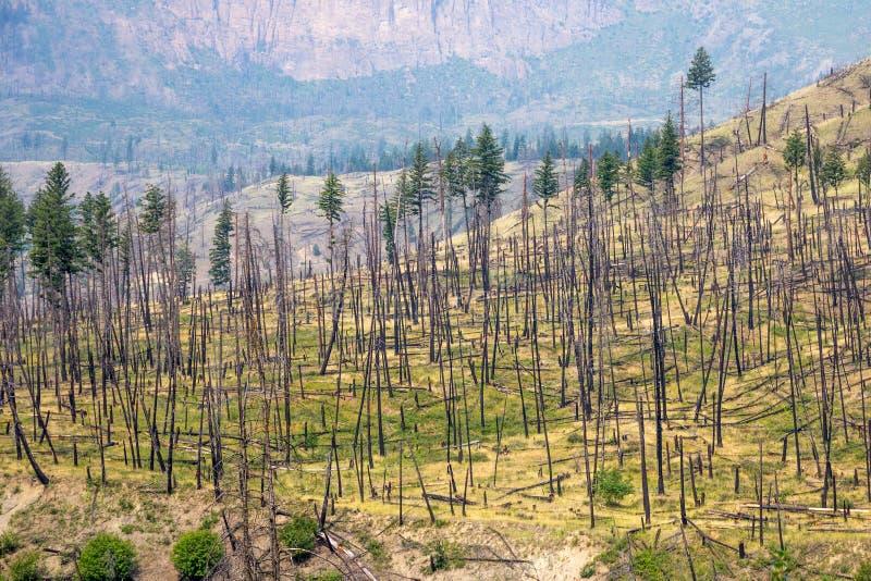 Recuperação do incêndio florestal BC na região do ` s Thompson-Okanagan fotos de stock