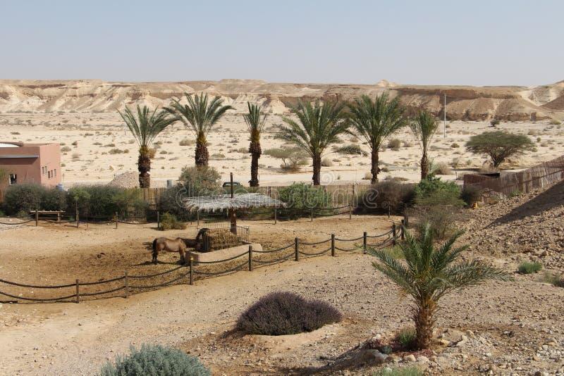 Recurso do deserto imagem de stock