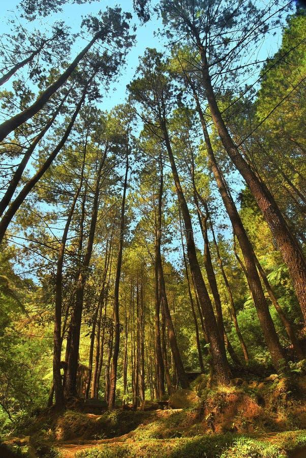 Recursos naturales 07 imagen de archivo