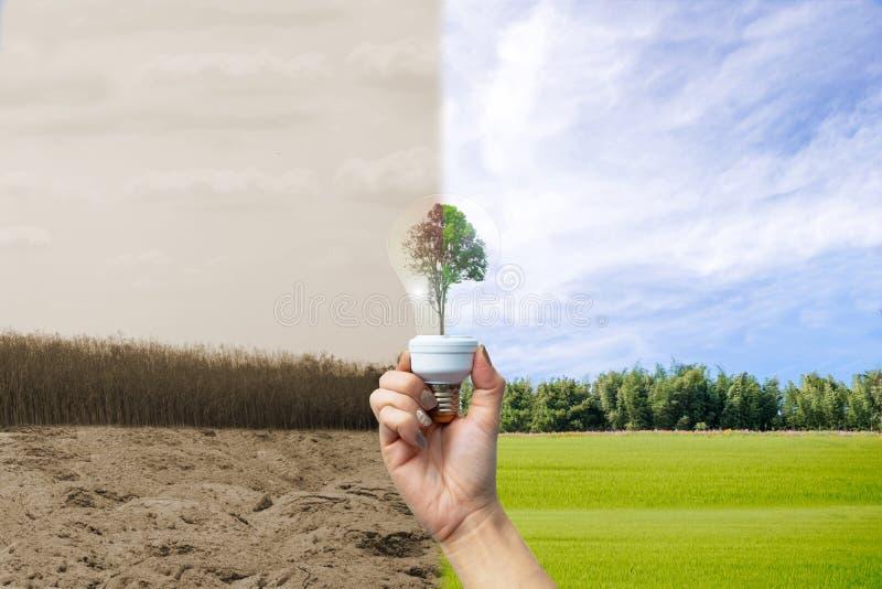 Recyclable środowisko istota ludzka wręcza trzymać dużej rośliny drzewna w żarówce zdjęcie stock