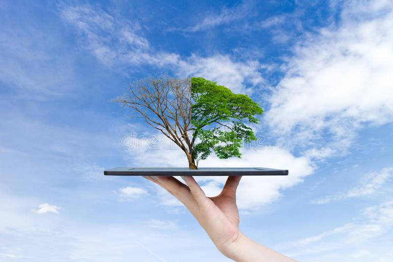 Recyclable environment human hands holding big plant tree the tablet. Recyclable environment human hands holding big plant tree on the tablet royalty free stock image