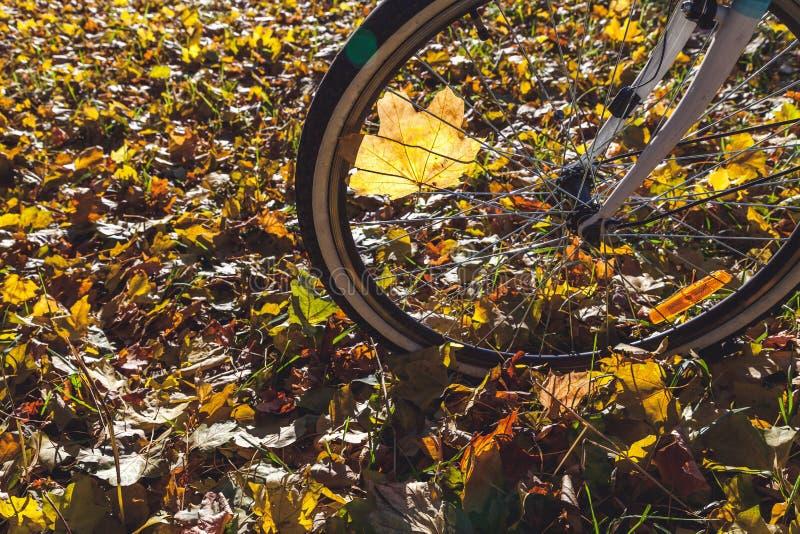 Download Recyclage En Plan Rapproché De Parc D'automne Photo stock - Image du divertissement, conduite: 77158404