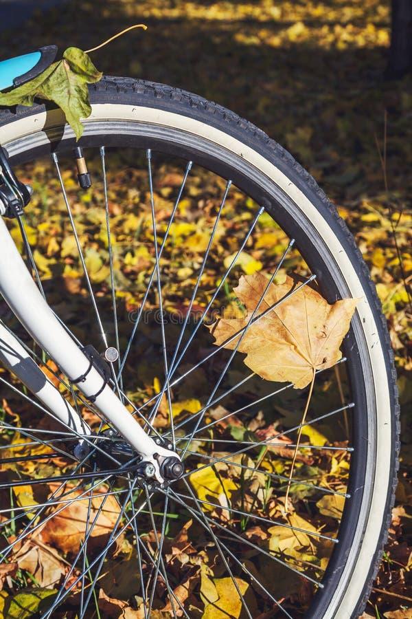 Download Recyclage En Plan Rapproché De Parc D'automne Photo stock - Image du octobre, cercle: 77158838