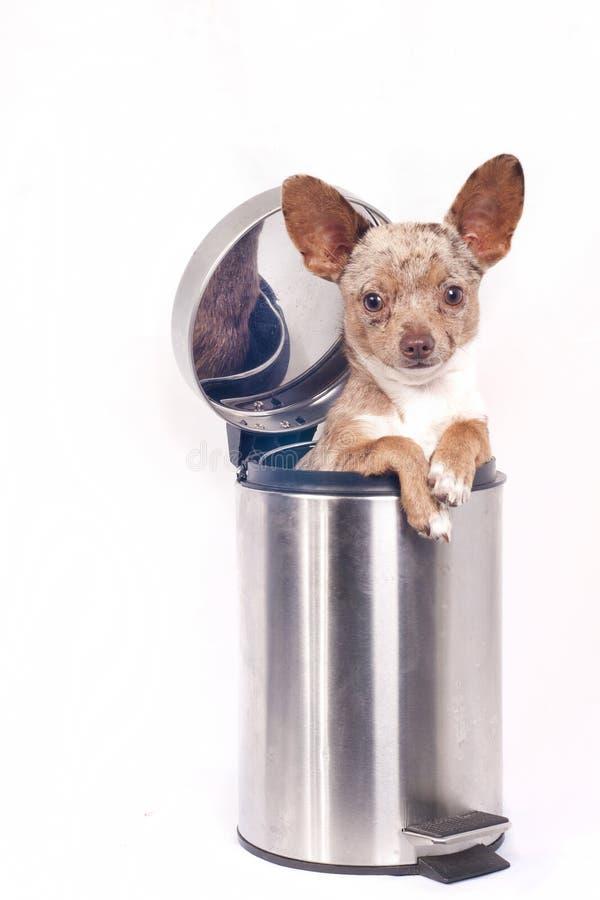Recycle bin dog