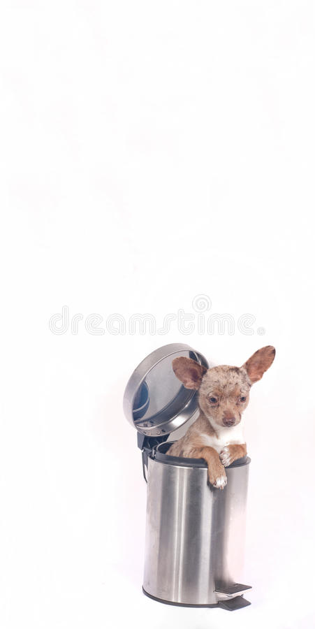 Download Recycle bin dog stock image. Image of icon, arrow, expression - 21524085