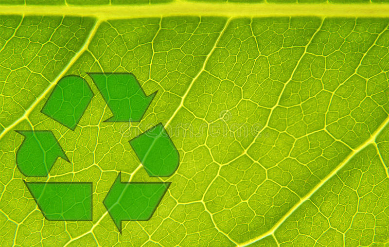 Recycle Nature. Close up picture of a leaf and all of its veins of growth and life showing bright with brilliant greens and yellows with a global recycling stock photos