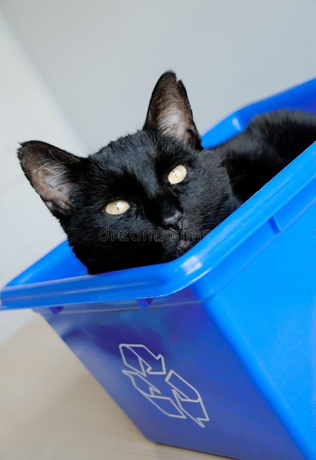 Recycleer een Kat stock afbeeldingen
