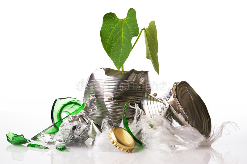 Recycling concept plant growing out of rubbish. Green recycling concept plant growing out of rubbish on white reflective background royalty free stock photography